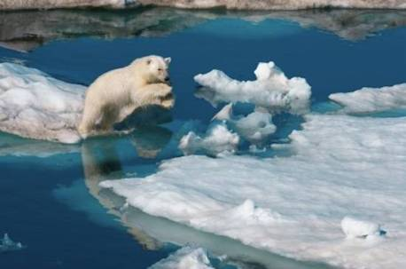 nicklen-leaping-polar-bear.jpg.644x0_q70_crop-smart