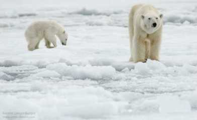 50-600-ursa-polar-2-525