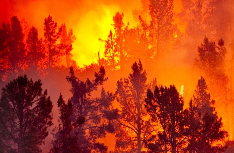 wildfire-widescreen-a-1.jpg