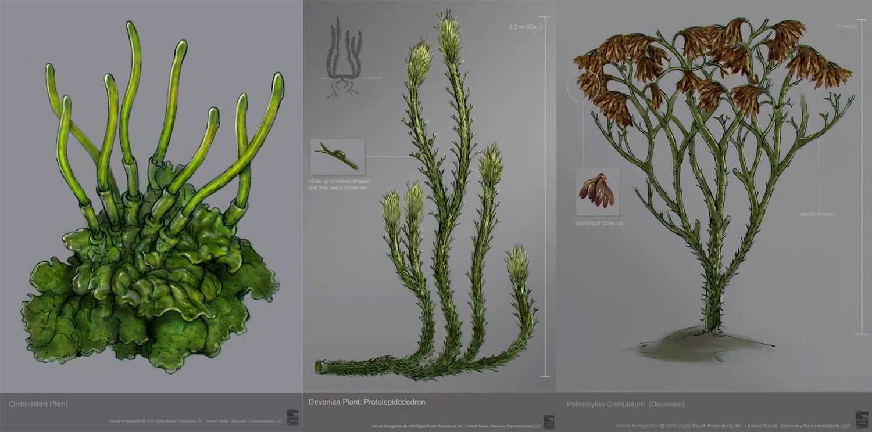 Resultado de imagem para ordovician plants