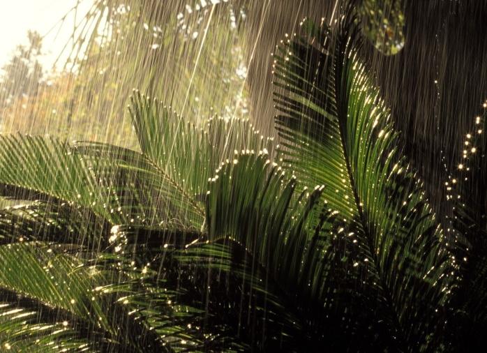 chuva-floresta
