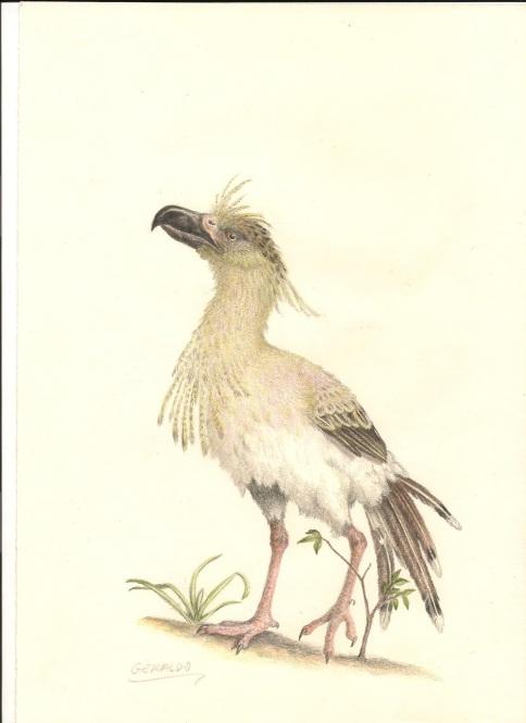 Resultado de imagem para Paleopsilopterus
