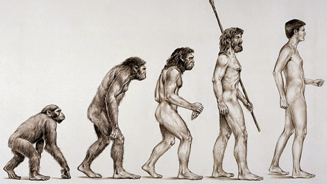 Resultado de imagem para evolução