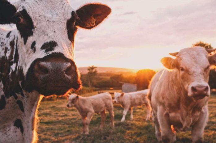 farm-1-e1510748149300