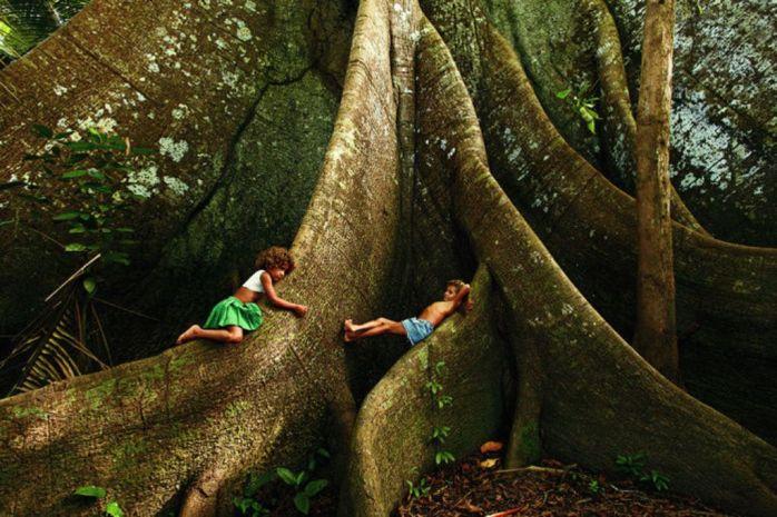 Samaúma_a_rainha_das_florestas