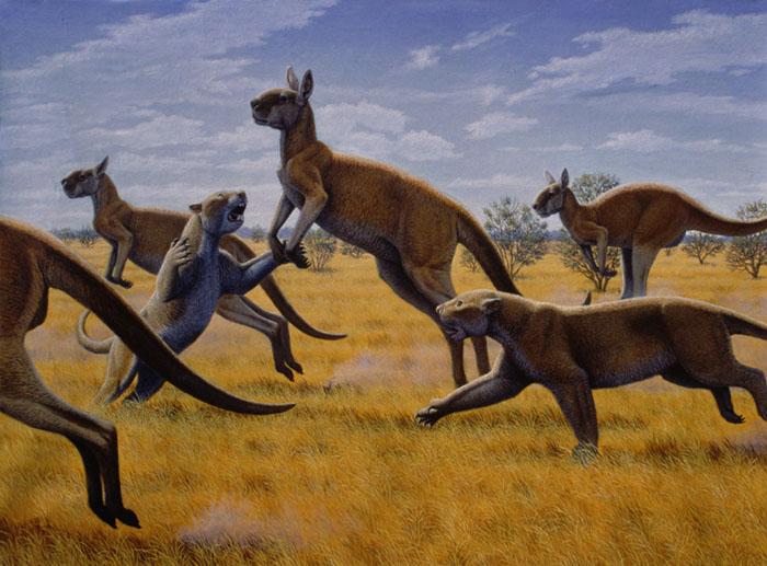 Extinction around the world: Thylacine and Thylacoleo